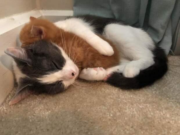 Начинаем сеанс котяткотерапии!