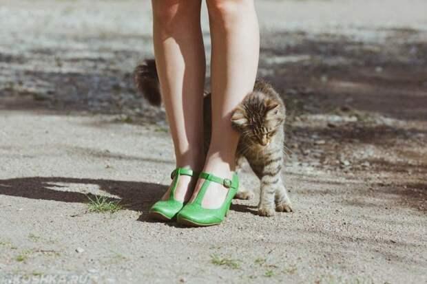 Кошка помечает хозяина НЕЛЬЗЯ, Они, когда, кошек, об тебя, отгонять, трутся