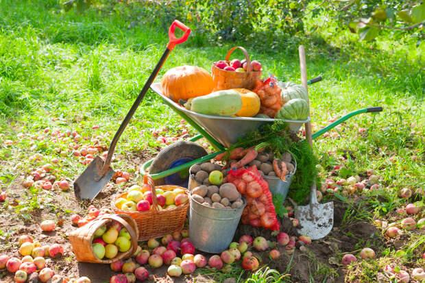 Работы в саду и огороде в сентябре: 5 важных дел