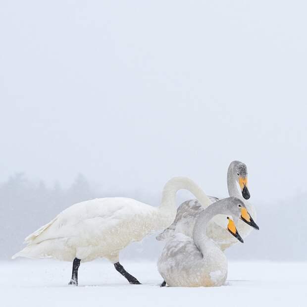 Мир животных на снимках Марселя Ван Остена