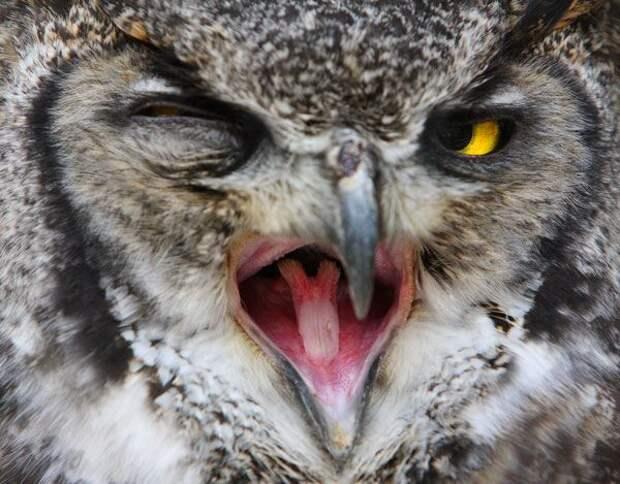 Животные,которые не стесняются показывать нам свой язык (35 фото)