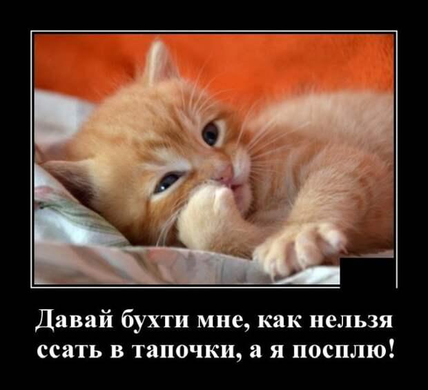 Демотиватор про тапки и кота
