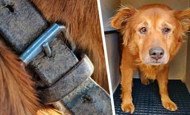 Один звонок сделал из бездомной собаки счастливого барбоса. Пёс примером доказал, зачем нужен микрочип