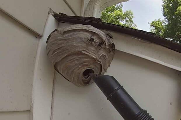 Убираем осиное гнездо пылесосом