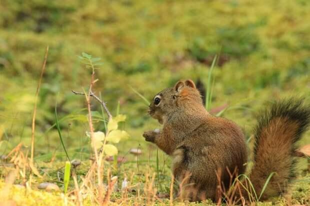 Грибы лисички - уже пора собирать и готовить!