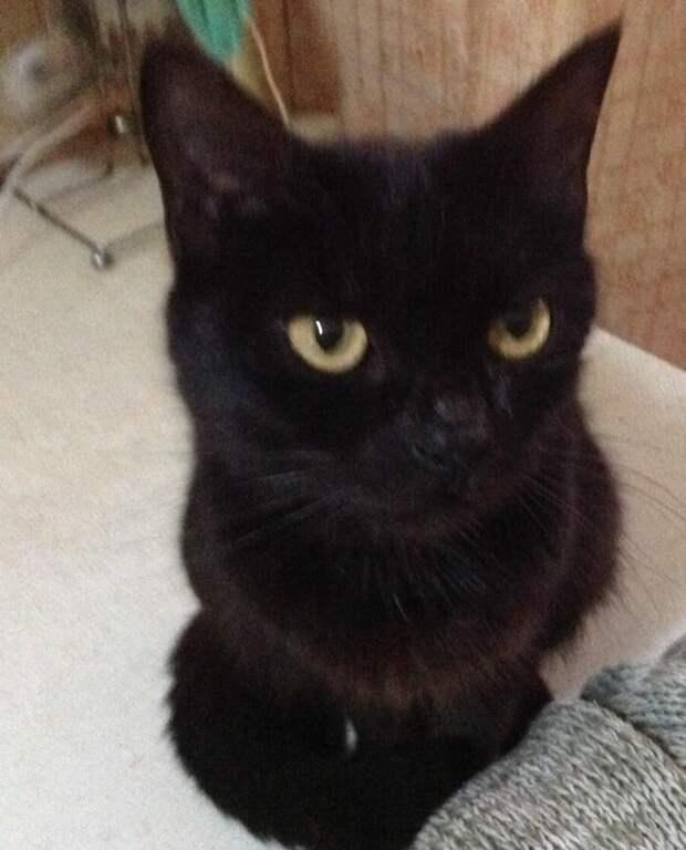 Как к нам вернулась кошка Сонечка или Почему нельзя отдавать котят незнакомым людям