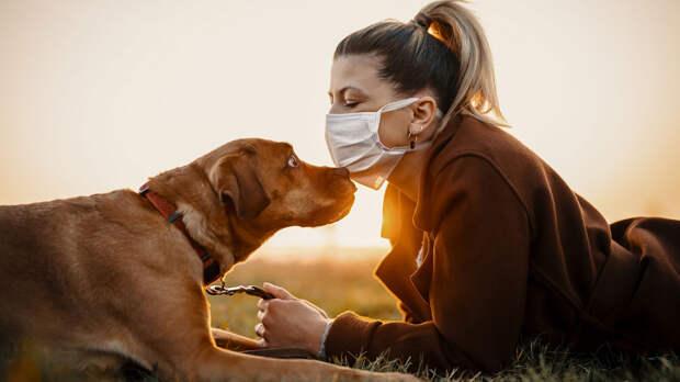 Тест на антитела к коронавирусу для животных создали в России