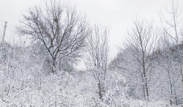 ВОренбуржье сохранится морозная погода иусилится ветер