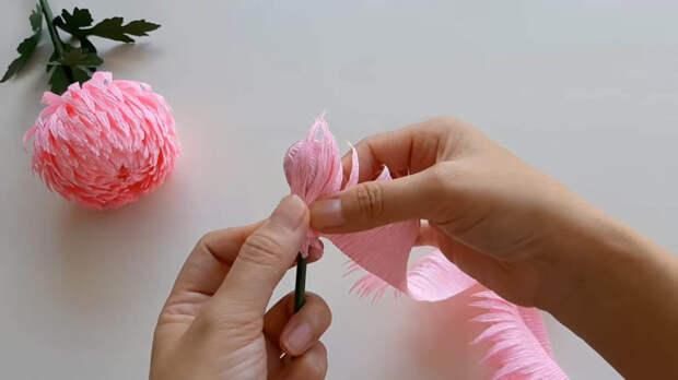 Фантастически красивая хризантема всего за полчаса