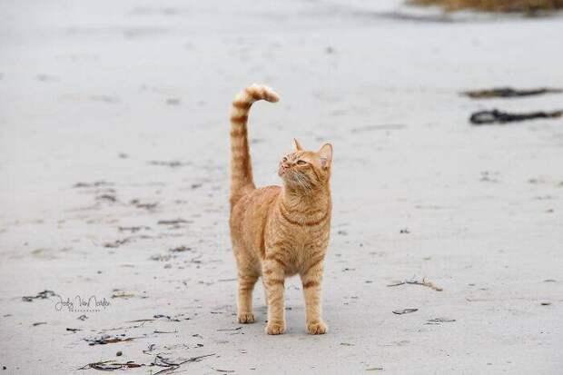 Кот впервые побывал на пляже и его впечатление очевидно