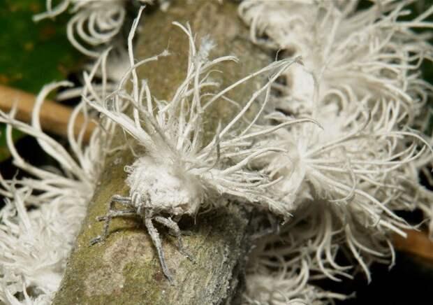 Необычные насекомые нашей планеты