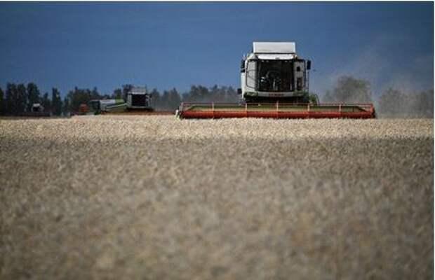 Combines harvest wheat in a field of Triticum farm in Omsk region, Russia September 16, 2020. Picture taken September 16, 2020. REUTERS/Alexey Malgavko
