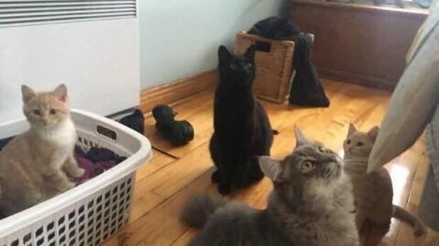 Найденные в промзоне голодные котята готовы друг ради друга на всё
