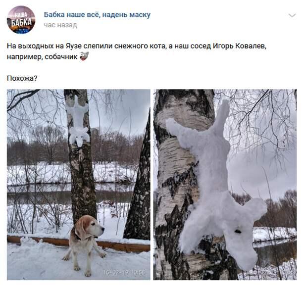Фото дня: житель Бабушкинского вступил в противостояние со снежными котами