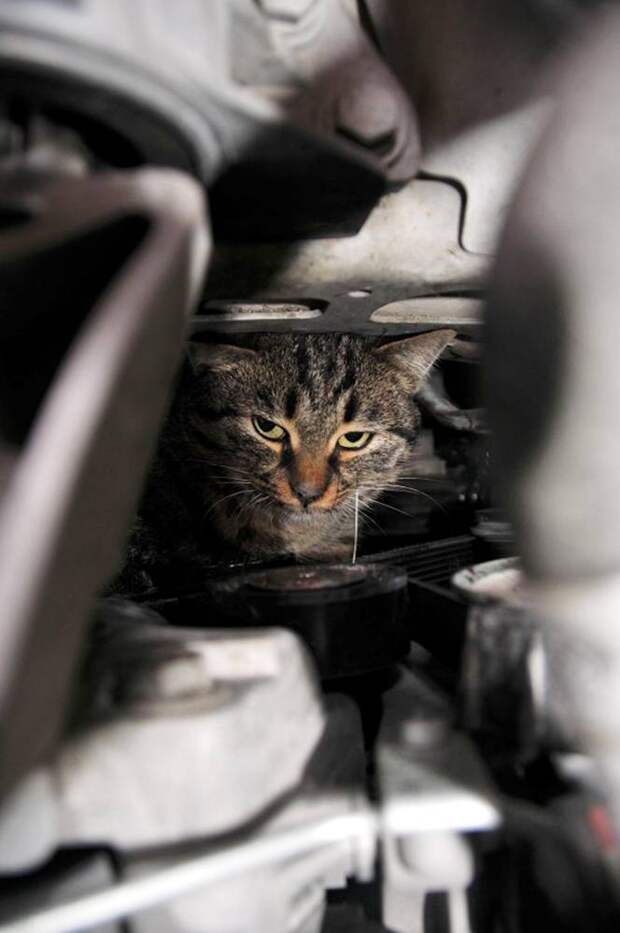 """Pic shows: The stray cat that had wedged itself in the engine of a car in Turkey was finally pulled out of its hideaway.nnThis is the moment a stray cat that had wedged itself in the engine of a car in Turkey was finally pulled out of its hideaway by firemen.nnAnd as the picture shows the petrified cat was far from happy at being yanked out from the engine block of the partially dismantled car in the city of Van in eastern Turkey.nnAnd the car's owner was also unhappy, after he discovered he was being hit with a 50 GBP bill for taking his car apart and then putting it back together.nnDriver Nurullah Kurman, 40, had discovered the cat stuck inside the engine after noticing that the car was not driving properly when on his way to the shops.nnHe told local media: """"I opened up the hood and realised that there was a cat inside which was interfering with the mechanism. I tried to get it out but failed, and so I called the fire service to see if they could get it free.""""nnHe said that he was worried about driving the car with the cat inside in case it caused a crash and also said he did not want to see the cat hurt.nnFiremen had also been unable to get the cat out despite trying several tricks including pouring cold water on the animal, and in the end the car had been towed to a nearby garage.nnThe mechanics then spent two hours taking the car apart before firemen could put their hands inside and yank the cat free.nnAt some stage in the process its leg was broken, and this snap shows the moment the petrified and soaking wet moggy was pulled out of the engine and handed over to staff from an animal charity.nnThey took it to vets where it was treated for the broken leg and is now recovering and looking for a new owner.nnAnd an unhappy Kurman was then given a bill for putting his car back together.nnHe said: """"I thought that because I called the firemen and they towed it here it would be paid for by the state. It is a stray cat, I don't see why I should have to pay for it?""""nnBu"""