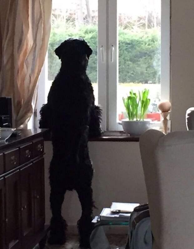 Кто там? домашний питомец, животные, как люди, милота, подборка, позитив, собака