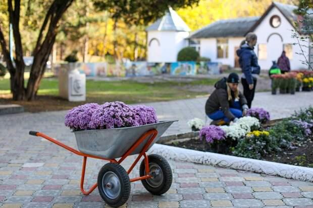 В Детском парке Симферополя высадили 300 кустов хризантем