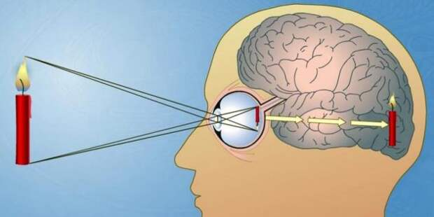 Не верь глазам своим: 6 невообразимых трюков, которые проделывает мозг с нашим зрением
