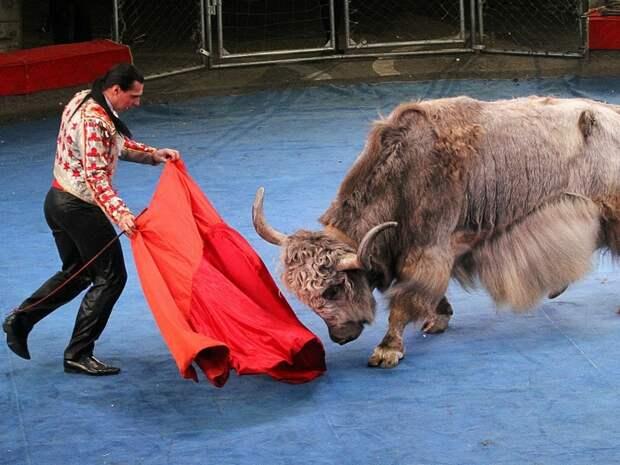 Яки в цирке