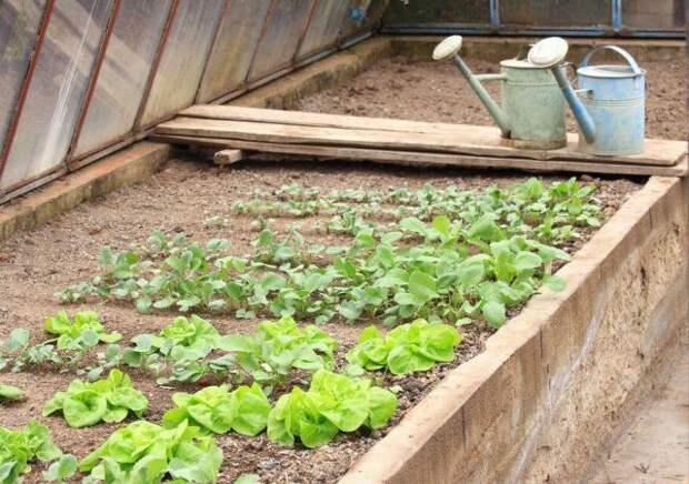 Как собрать три урожая в теплице