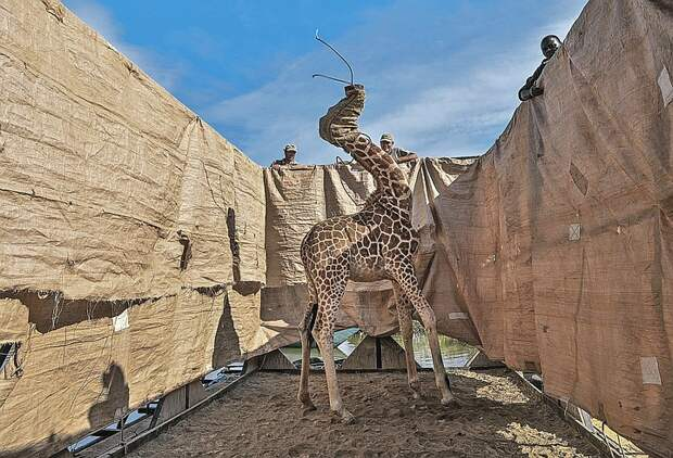 Лучшие фото World Press Photo-2021: Самые пронзительные кадры о животных и пророде