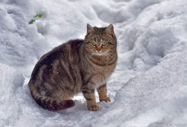 Умоляем, помогите, хотя бы передержкой! В садоводстве морозы, там активизировались стая собак и лисы, несколько котов уже стали их жертвами...