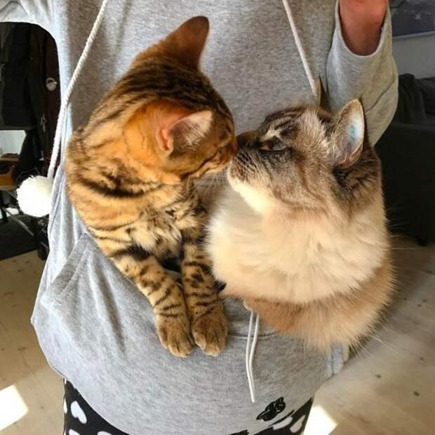Неугомонный котёнок-хулиган научил серьёзную кошку веселью и бесшабашности