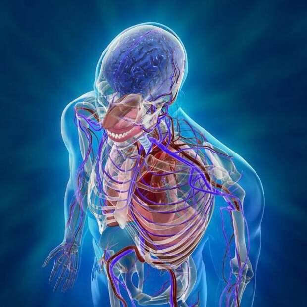 8 частей тела, которые нам уже не очень-то и нужны, но они всё ещё у нас есть