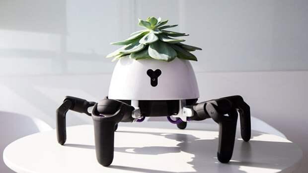 Пекинский стартап Vincross представил робота, призванного позаботиться о комнатных растениях Hexa, горшок, новинка, помощник, растение, робот, устройство