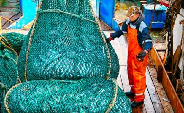 На фото: прибрежный промысловый лов минтая