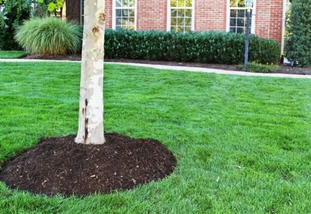 Как оформить приствольный круг дерева