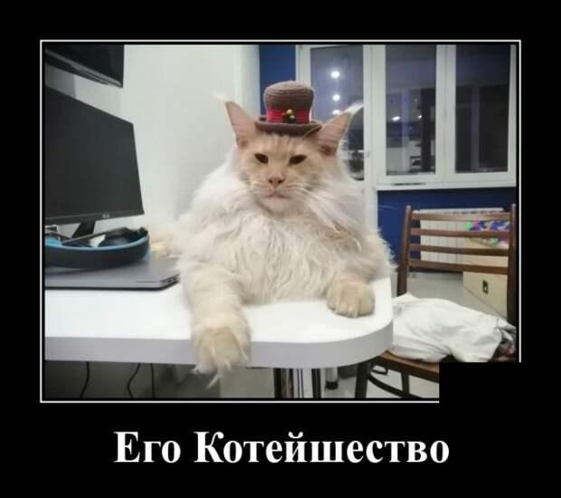 Демотиватор про котейшество