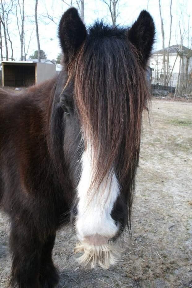 Не всякая лошадка бывает по-настоящему усатой