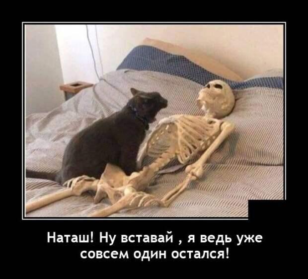 Демотиватор про Наташу и кота