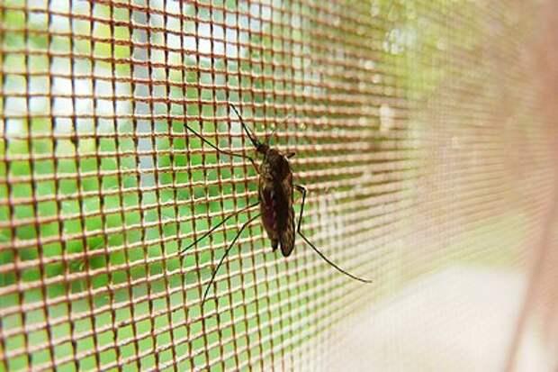 В Крыму борются с полчищами комаров специальными пушками