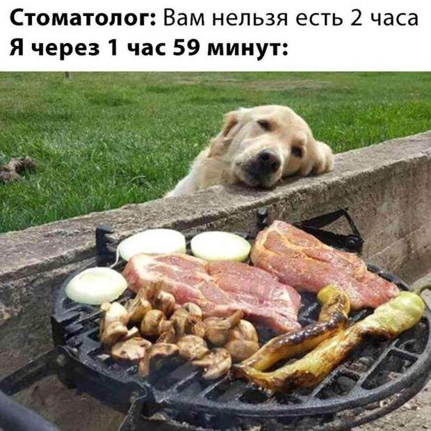 Хвостатые воришки готовы стащить еду прямо из-под носа у своих хозяев ...)