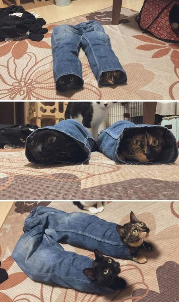 Смешные фотографии кошек, которые поднимут вам настроение и скрасят ваш день