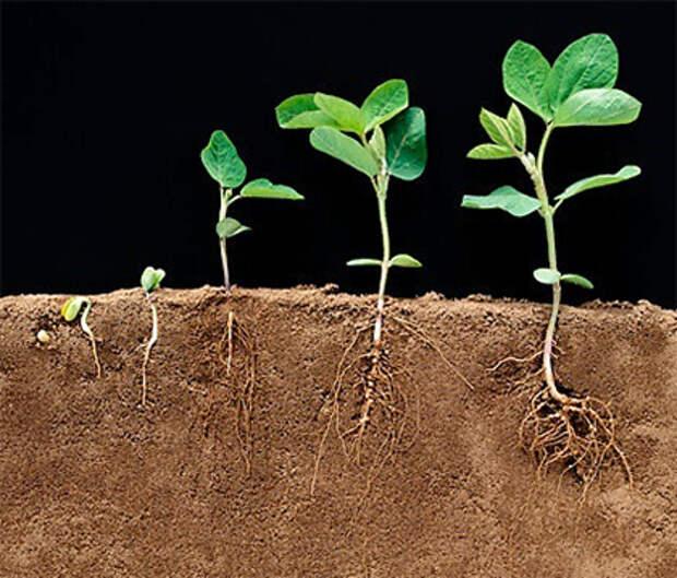 Агропоиск Товары и цены Регуляторы роста