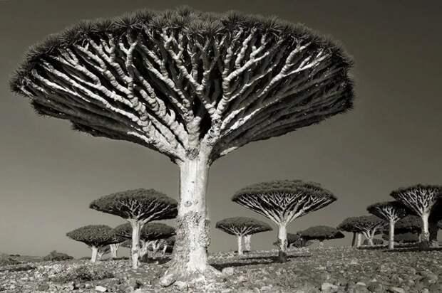 Женщина потратила 14 лет в поисках древних деревьев. И ведь незря!