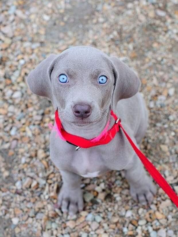 18 идеальных фотографий собак, которые любого котолюба собьют с пути истинного