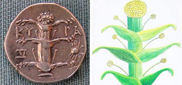 Легендарные и давно забытые грибы и травы с мистическими свойствами