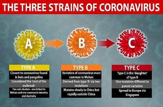 Типы коронавируса