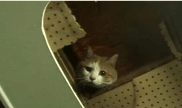 В Корее спасли кота, который целых 2 года прожил в стене торгового центра