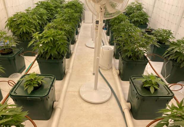 Крымчанин организовал дома теплицу для выращивания марихуаны