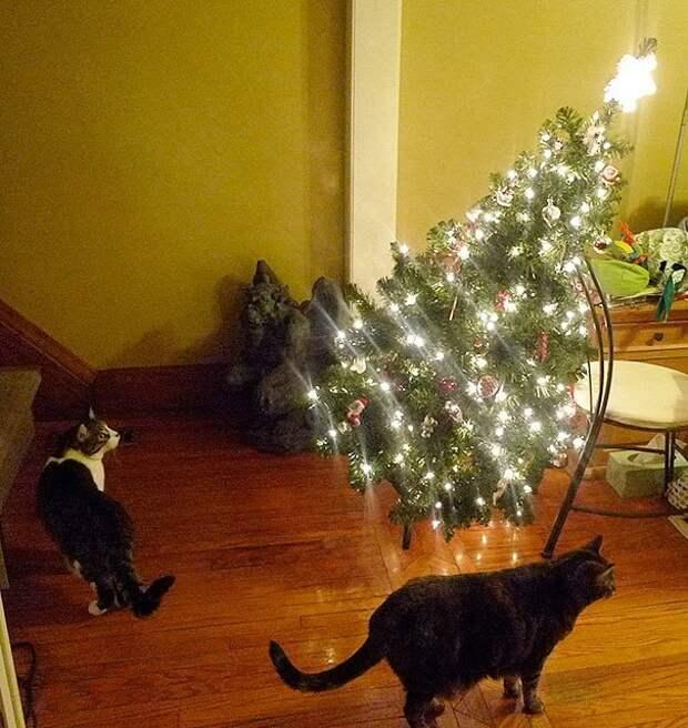 13. А что произошло? животные, новый год, праздник к нам приходит, разрушительная сила, рождество, собаки и кошки, юмор