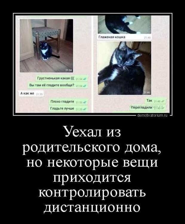 Смешные комментарии. Подборка chert-poberi-kom-chert-poberi-kom-09040703092020-7 картинка chert-poberi-kom-09040703092020-7