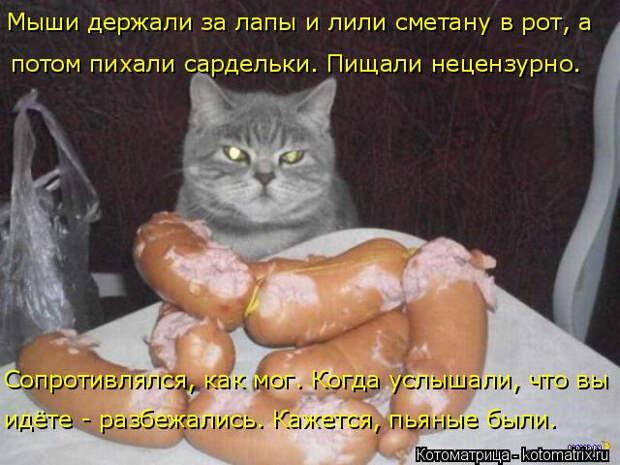 Свежая коллекция лучших котоматриц недели