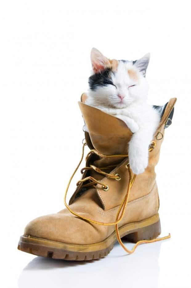 Что делать, если кот облюбовал обувь для постоянного сна?