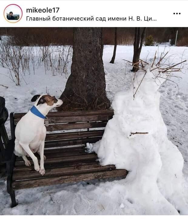 Фото дня: собака и снеговик отдыхают на лавочке в Ботаническом саду