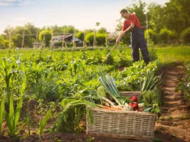 Успехи российских фермеров и подорожание продуктов